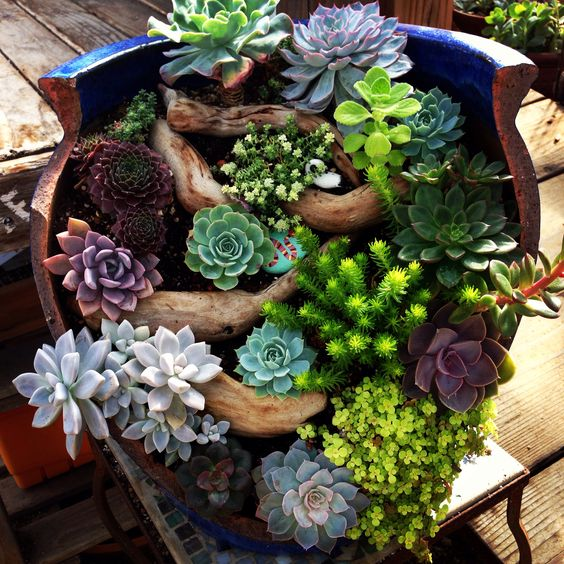 broken pot fairy garden pinterest 5