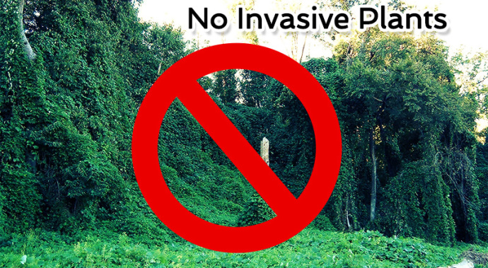 no-invasive-plants