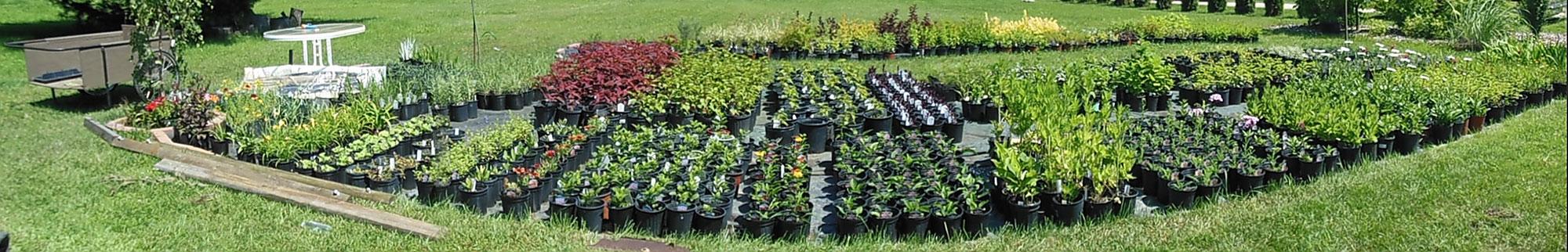 online-plant-nursery-pan
