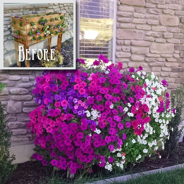pallet garden  ideas - flowers-hertoolbelt