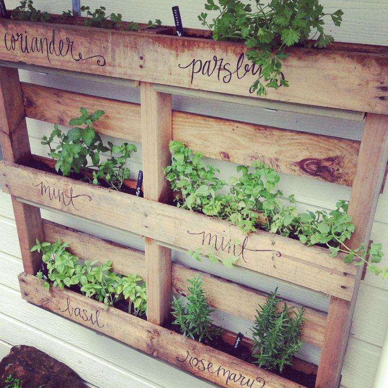 pallet garden ideas -herbs-zina