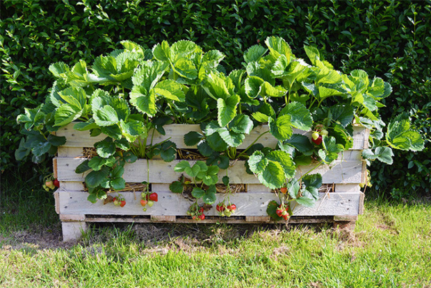 pallet garden ideas - vegetables-lovelygreens
