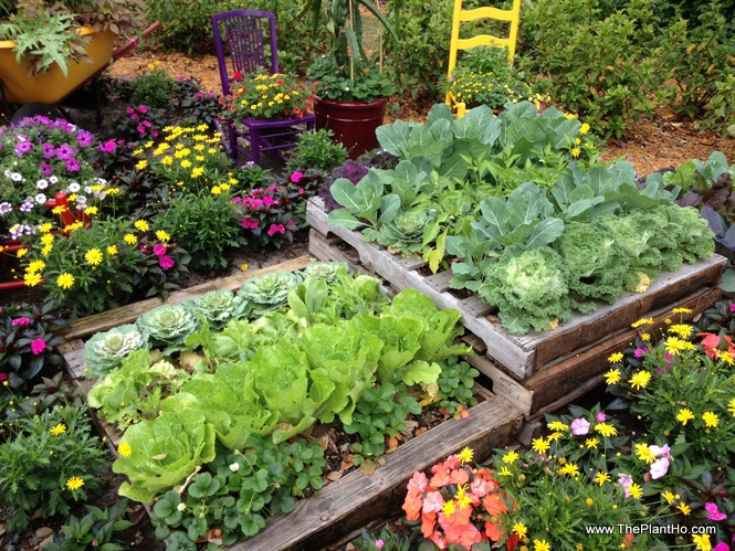 pallet garden ideas - vegetables-plantho