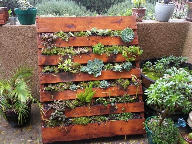 succulent pallet garden ideas - Garden Ideas With Pallets