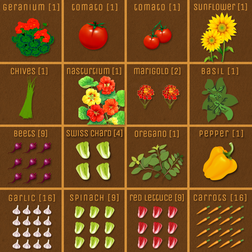 Square foot gardening layout companion plants