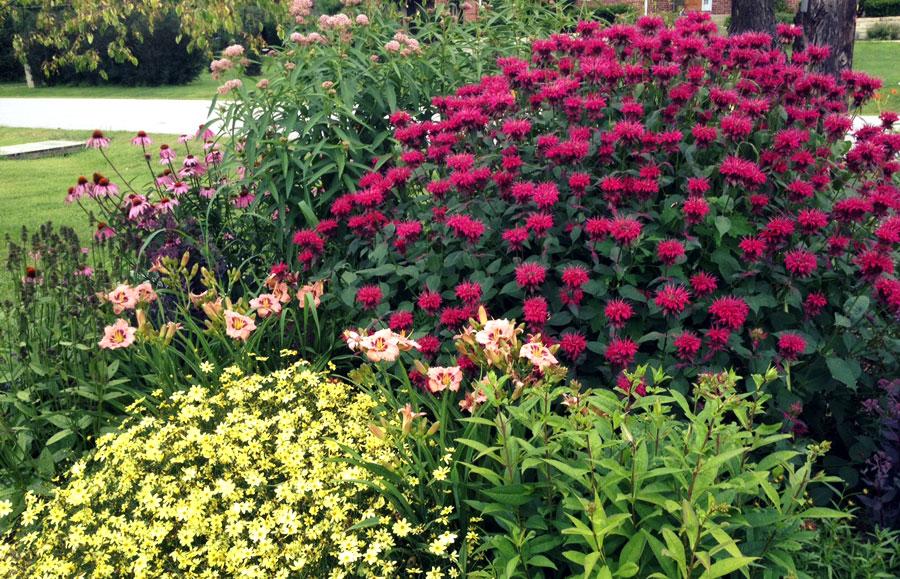 great garden soil  garden 2