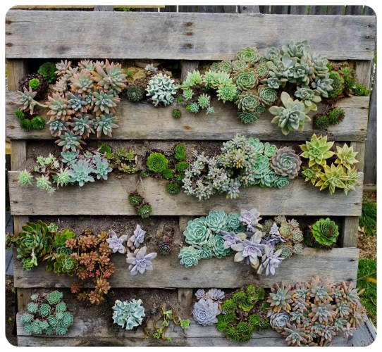 10 Beautiful Pallet Garden Ideas Roots Nursery - Pallet-garden-ideas