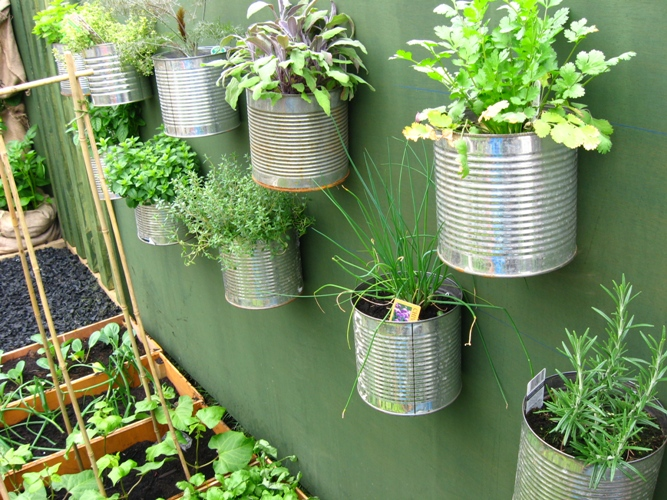 Another great way to recycle your old cans roots for Small area planting ideas