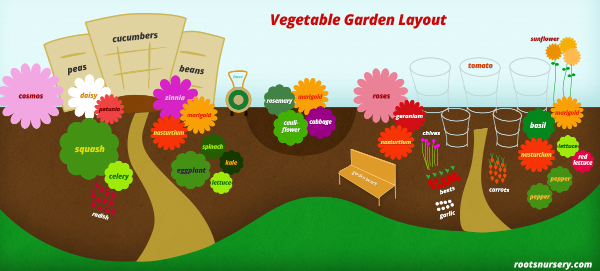 vegetable garden layout  free infographic  roots nursery, Garden idea