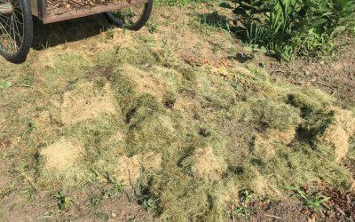 Ruth Stout Method of No Work Gardening