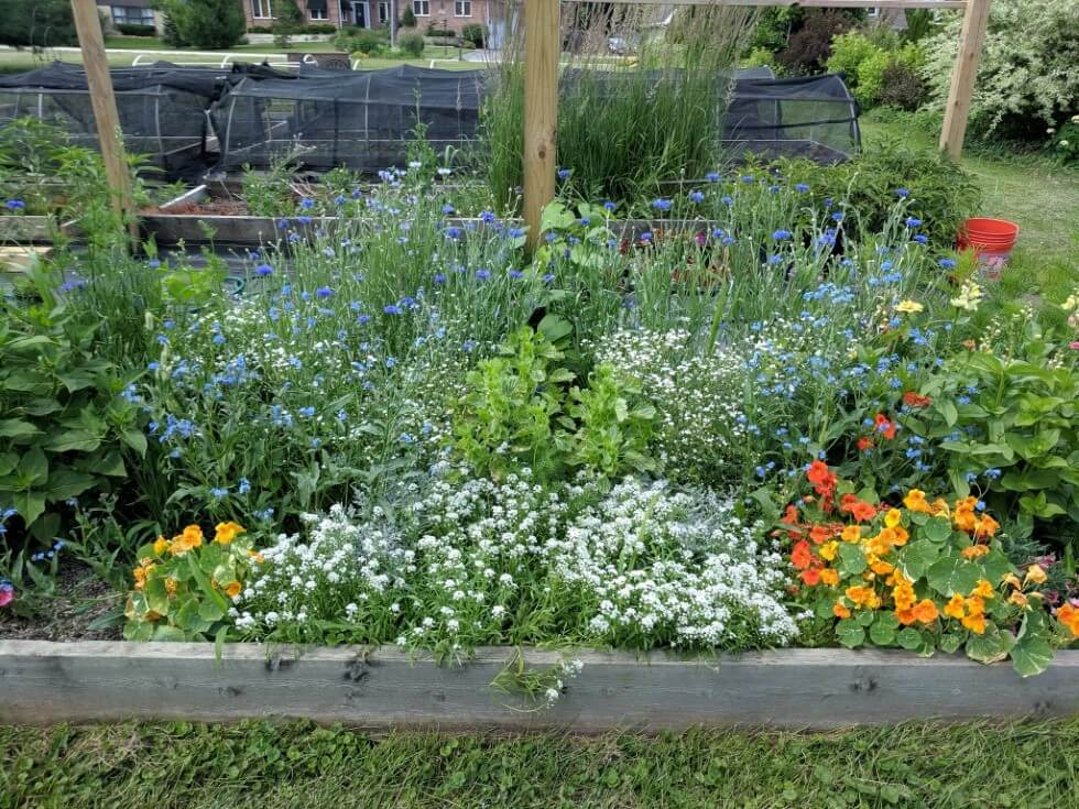 Flower Garden in 3 inches of compost - 2019