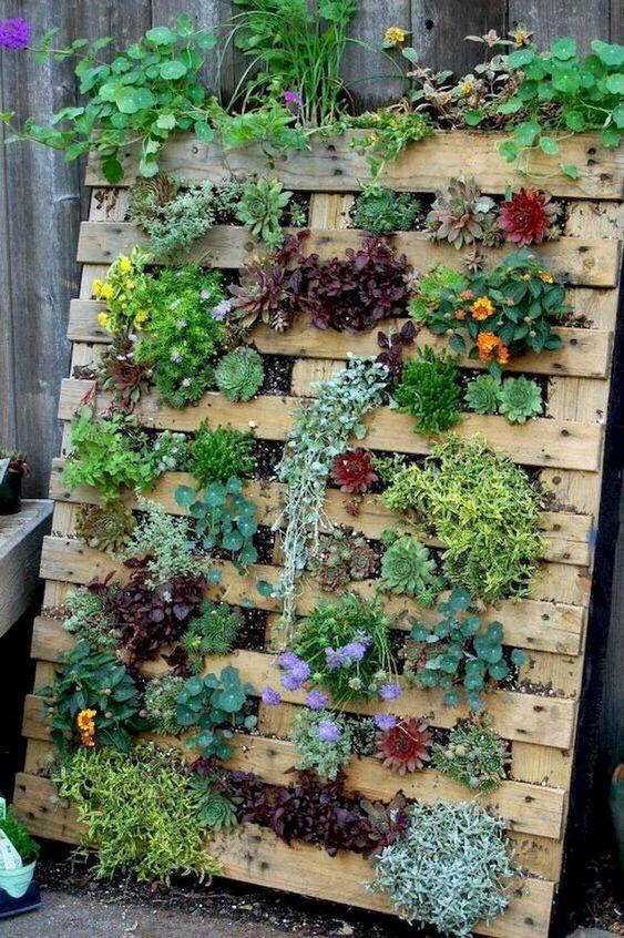 Pallet Garden Plants