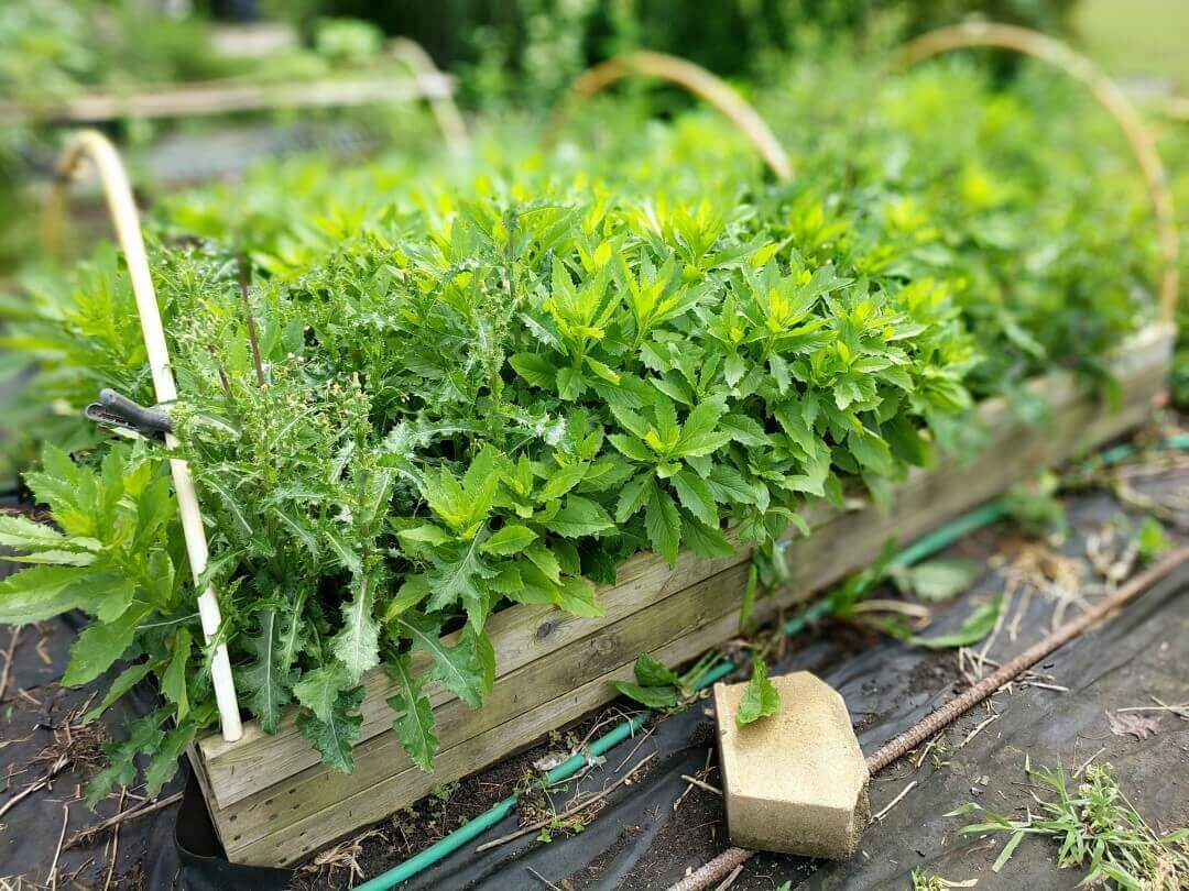 Raised Bed Full of Weeds 2021