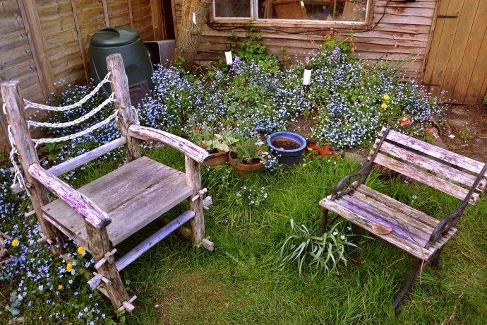 easy backyard flowers