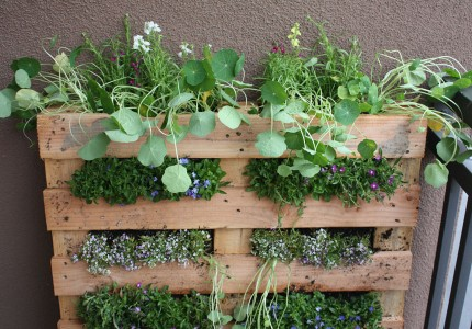 Vertical Garden Ideas: the Pallet Garden