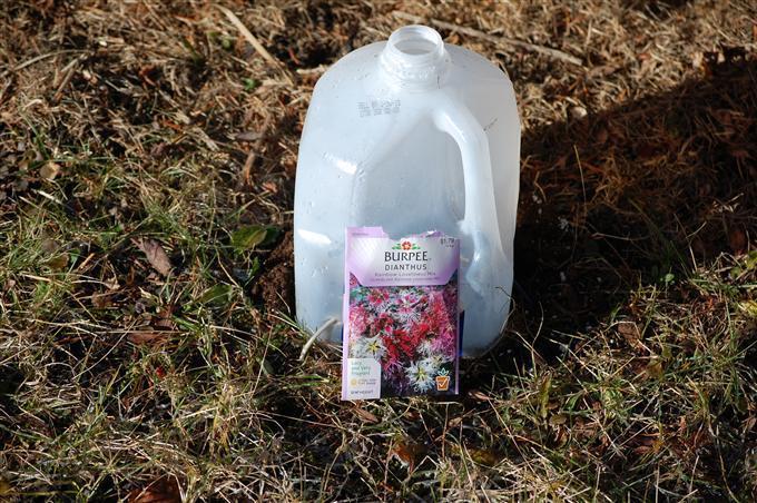 milk jug cold frame clotche