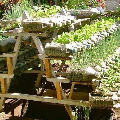 Plastic Bottle Garden