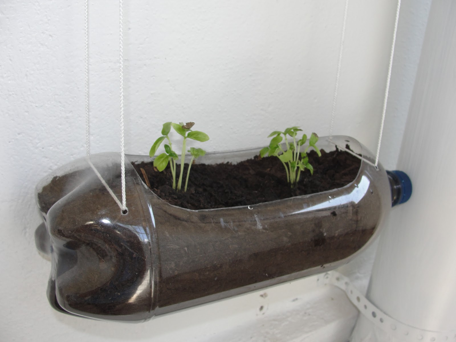 More On Recycling. 2 Liter Herb Garden