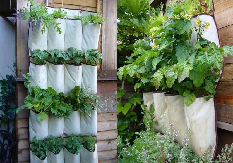 Ditch the Shoes, Grow More Plants!