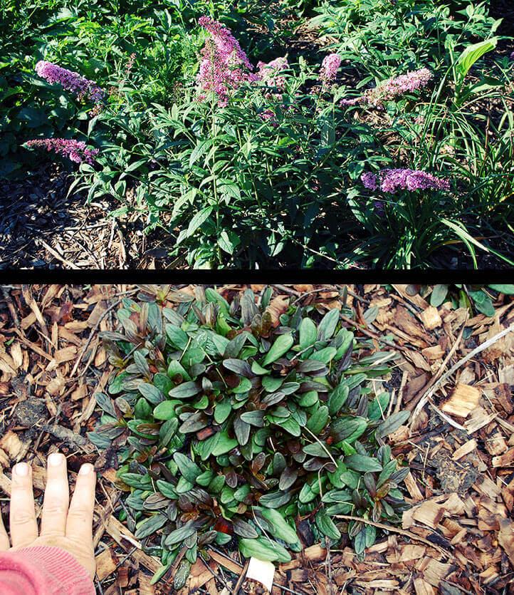 plant growth has quadrupled
