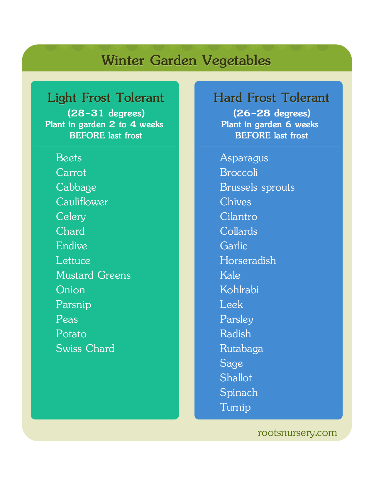 Winter Garden: Cold Hardy Winter Vegetables