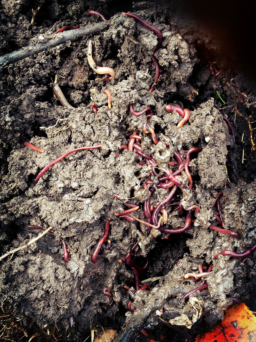 Soil Preparation. No-Cost Method for Great Garden Soil.
